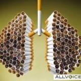 Membersihkan Paru-Paru dari Asap Rokok
